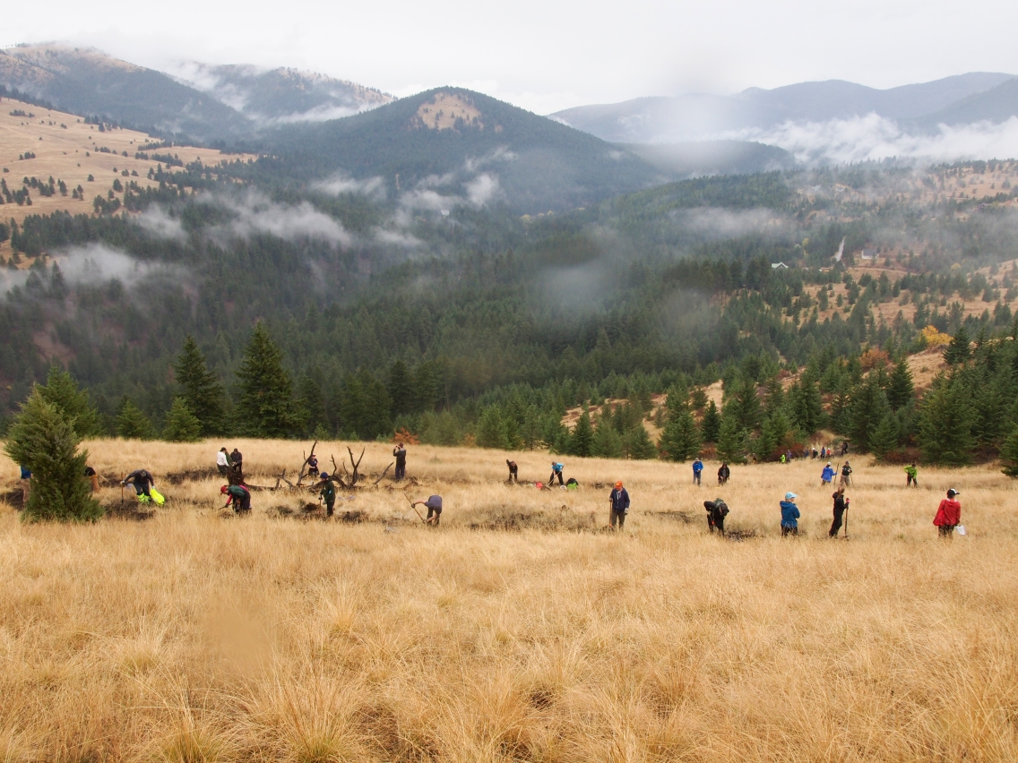 Volunteers work on the top half of the new Spur trail which faces towards Pattee Canyon for National Public Lands Day on Sept. 30, 2017. The top half of the Spur trail is the most intact fescue habitats or prairie like land with bunch grass, in Missoula according to Rob Bell, a maintenance tech assistant with Missoula Parks and Recreation. Bell is most excited to mountain bike on the trail when it hopefully opens to the public next spring.